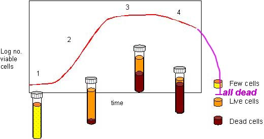 yeast growth curve #2